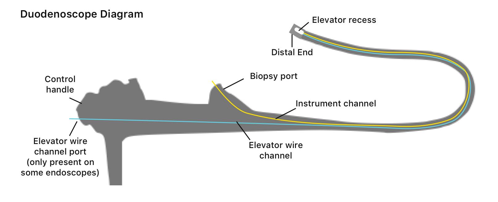 Duodenscope diagram