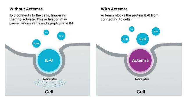 How Actemra Works Illustration