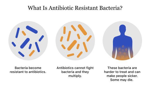 Graphic showing how antibiotic resistant bacteria work