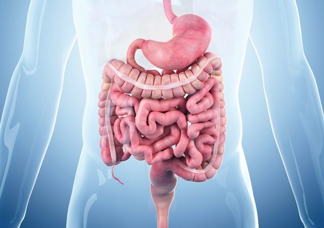 Illustration of the GI tract