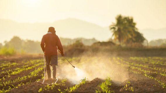 Farmer spraying crops