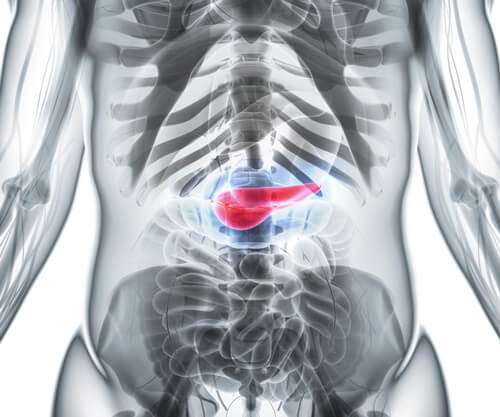 Illustration of the pancreas