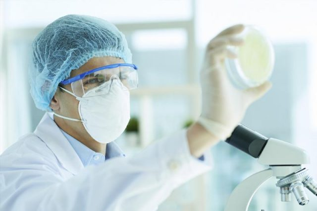 masked lab tech holds up a petri dish in front of a microscope