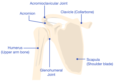 Shoulder Diagram