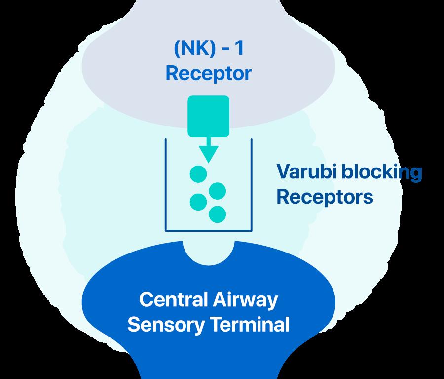 How Varubi Works Diagram