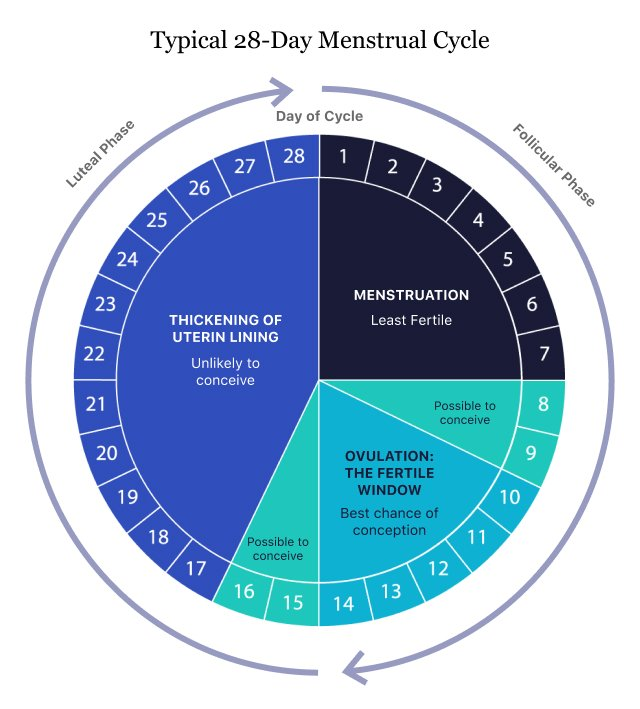 Typical 28-Day Menstrual Cycle