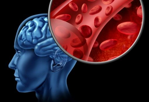brain and red blood cells illustration