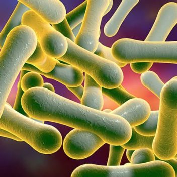 Microscopic view of Diphtheria bacteria