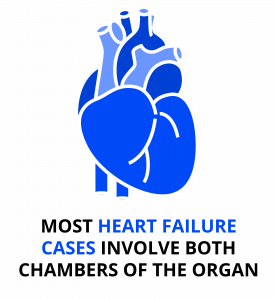 Most heart-failure cases involve both chambers of the organ