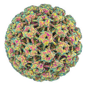 microscopic 3d view of HPV virus