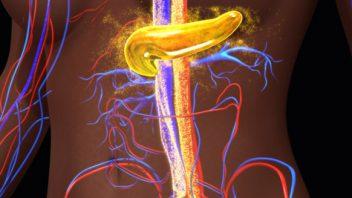 Pancreas Creating Insulin