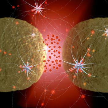 Neural receptors